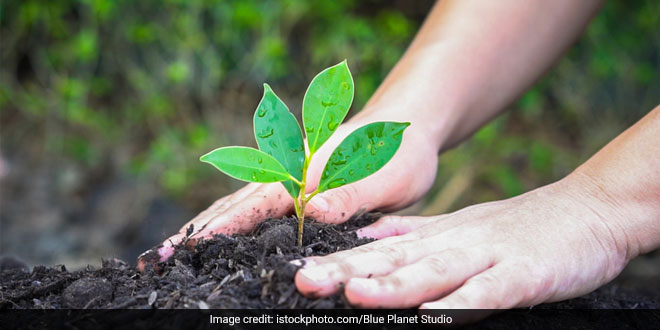 CM Naveen Patnaik Plans To Increase Green Cover Under 'Sabuja Odisha', Plant Over 1.30 Lakh Hectares Of Land