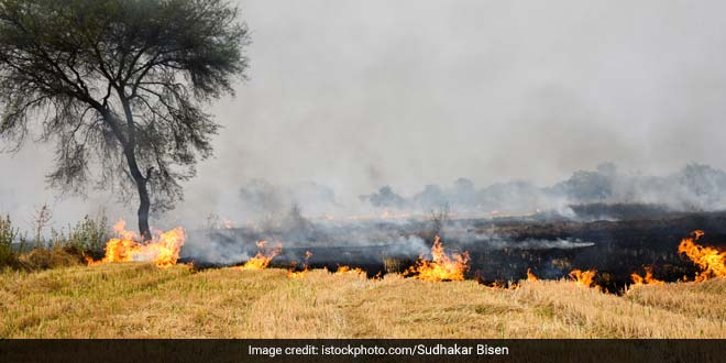 Amritsar Farmers Continue To Burn Stubble As Alternative Methods Are Expensive