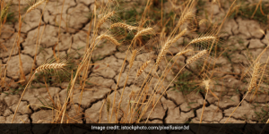 How Does Climate Change Affect The Food Chain?