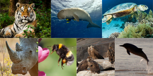 Environment Crisis: 7 Endangered Species On Verge Of Extinction Due To Human Activity And How It Impacts Us