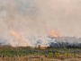Stubble Burning Rose By More Than 20 Per Cent This Year: Air Quality Commission Official