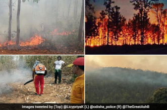 One of the fallouts of climate change is the intensifying forest fires, which in some cases rise to the level of the canopy of trees, destroying everything in its wake