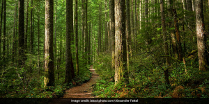 International Day Of Forests 2021: 5 Things You Need To Know