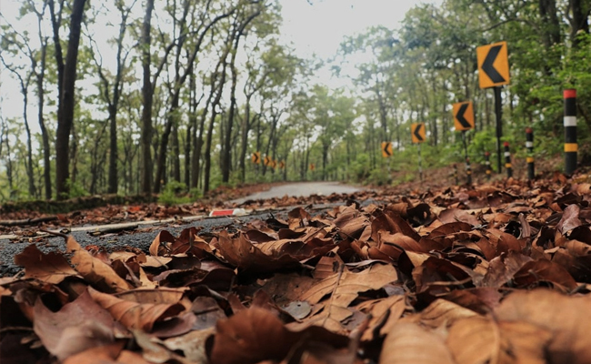 A Forest Officer From Jharkhand Comes Up With An Idea To Stop Forest Fires, Illegal Tree Felling And Creates Jobs