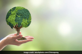 Opinion: Healing The Ecosystem With Sustainability