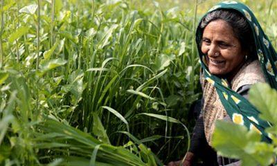 महामारी से सीख: मिलिए मध्य प्रदेश की कृष्णा मवासी से, जिनके किचन गार्डन ने उनके गांव को भुखमरी से बचाया