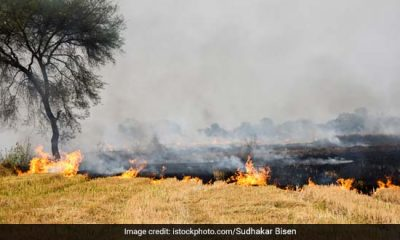 IARI Data Shows Spike In Farm Fires Post Monsoon; Situation Better Than Last Year