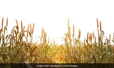 Study Shows Regular Millet Consumption Can Combat Anaemia